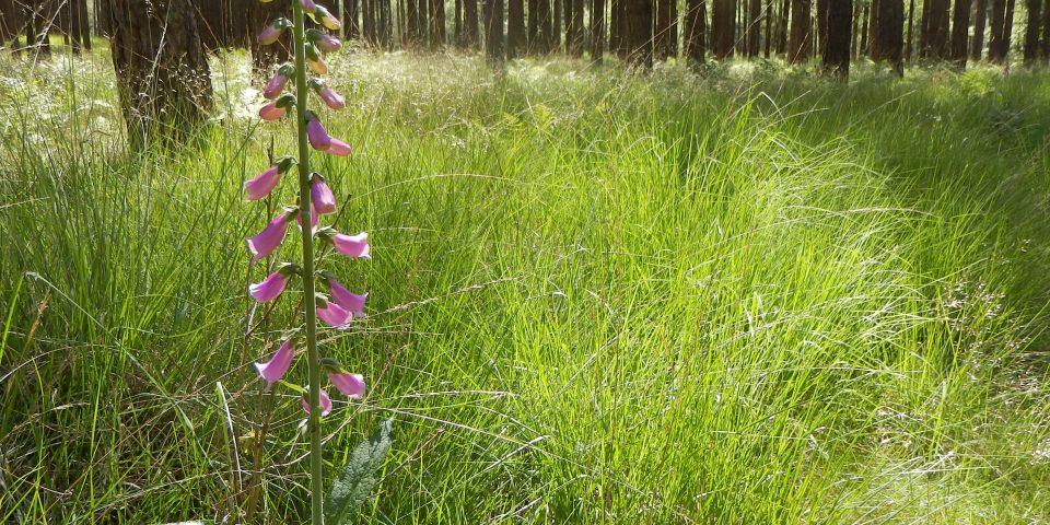 Natuurbegraafplaats Landgoed 'De Utrecht'